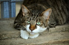 奥能登cats-eyes-2671903__340