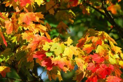 奥能登autumn-209479__340